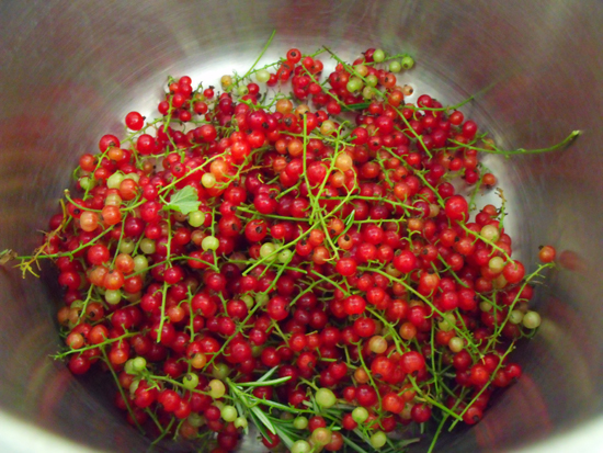 redcurrants and rosemary